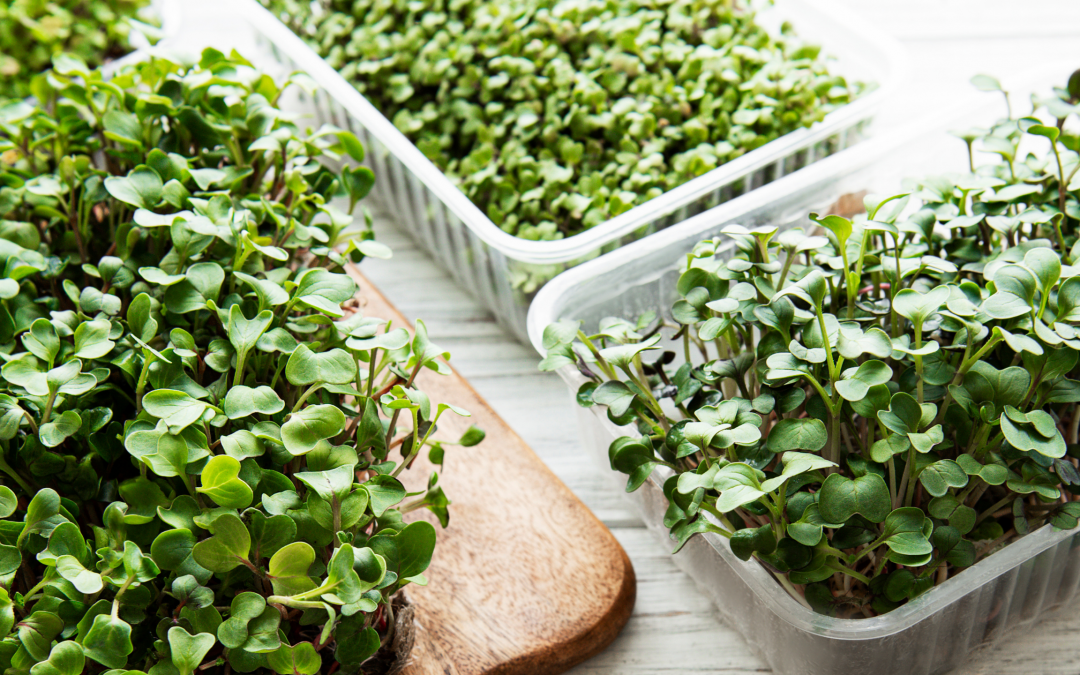 7 Must-Try Leafy Greens that aren't Spinach or Kale